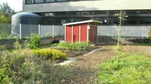 Der Schulgarten des FSG: Biologie zum Anfassen.