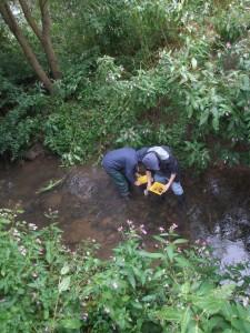 Die Schüler sammelten Wasserproben zur Untersuchung.