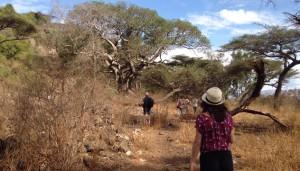 Fremde Vegetation: In Äthiopien erleben die Schüler den afrikanischen Kontinent.